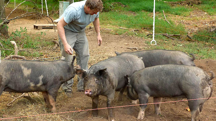 'American Meat' Documentary Features Hopewell Farm › Trenton Times, NJ.com (September 9, 2011)