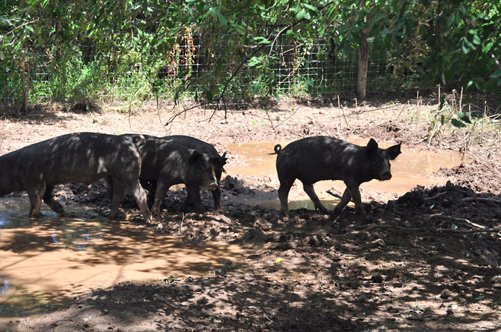 Double Brook Farm - Beating the Heat During the NJ Summers