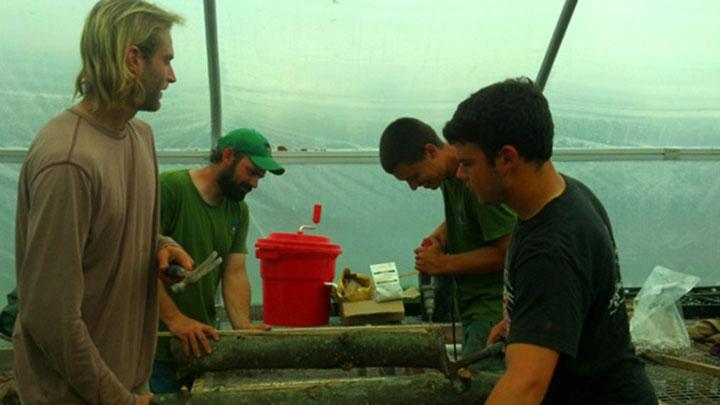 Shiitake Mushroom Innoculation