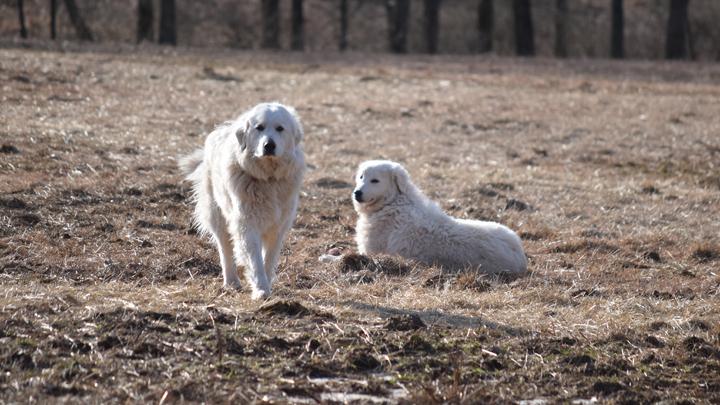 DBF_Dogs2